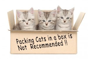 Three small kittens in a cardboard box